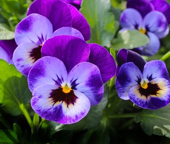 Green Thumb Tactics To Grow Annual Flowers For The Beginner