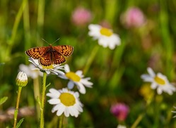 How To Start A Butterfly Garden | 123ish US